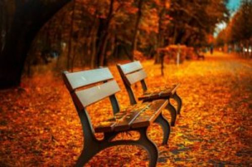 Bench along forest path autumn