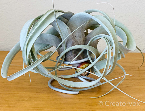 tabletop air plant holder made from armature wire, back view