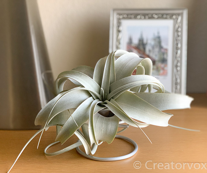 tabletop air plant holder