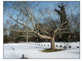 quaker cemetery south yarmouth x
