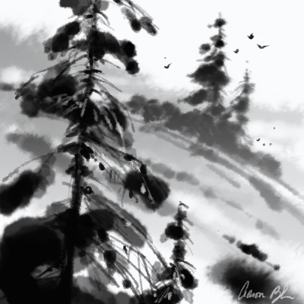 Photoshop Brush Pine Tree 3 Pine Tree PS Brushes Nature