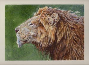 Aaron Blaise Animal Art