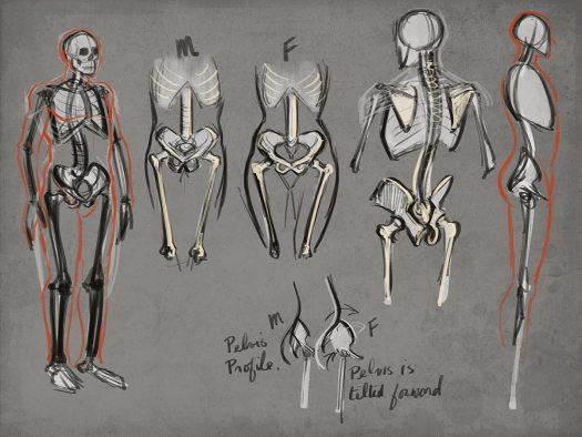 Figure Drawing Skeleton