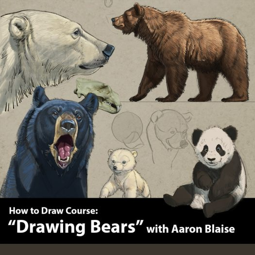 How to Draw Bears