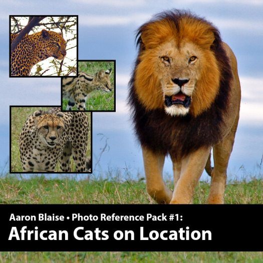 African Cat Artist Reference