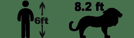 lion size comparison