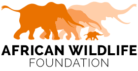 African Wildlife Foundation logo African Lion Facts