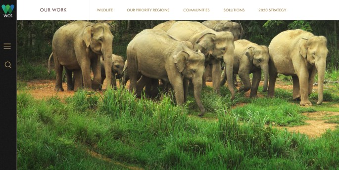 WCS logo Asian elephant facts