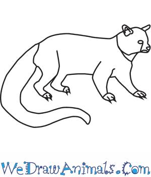 Binturong drawing