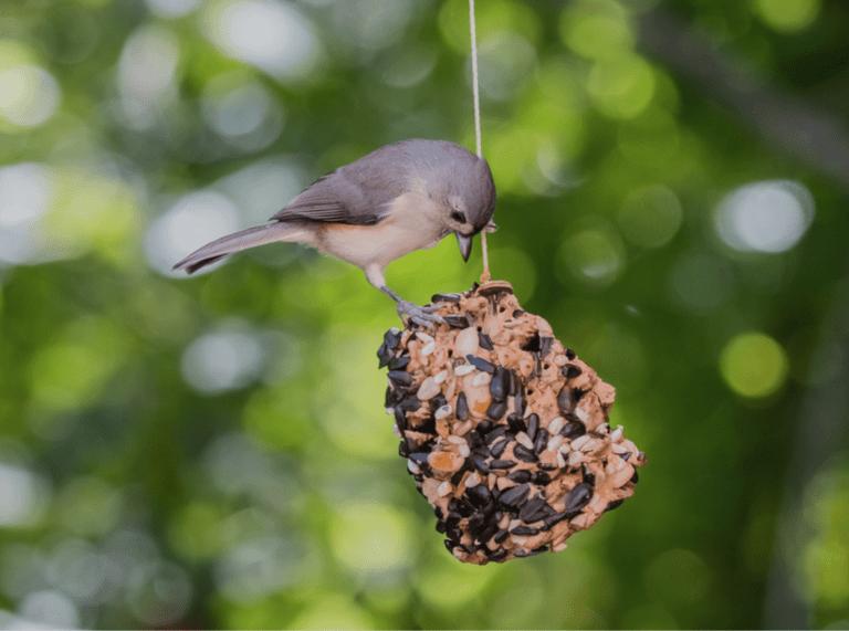 Pinecone Bird Feeder - Take Action