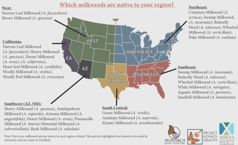 Native Milkweed Map