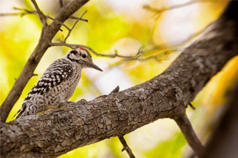 Tree Houses for Birds