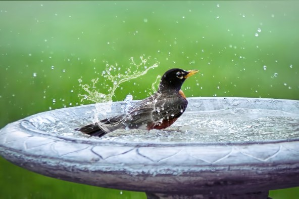 Bird Bath Creature Hero Project
