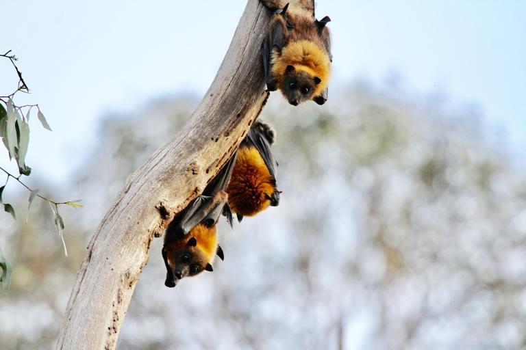 Bat House Creature Hero Project