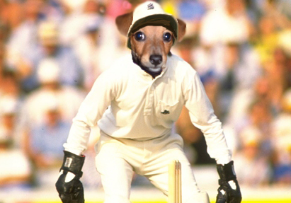 What if Jack Russell was a jack russell?