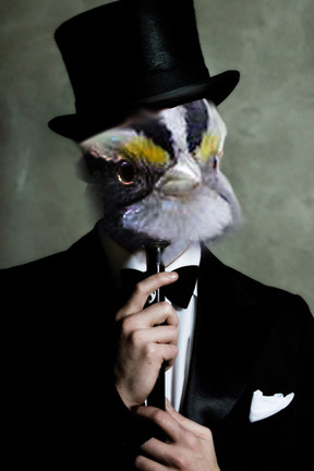 What if Sam Sparro was a sparrow?