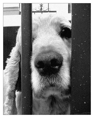 sad_dog_by_anapires2