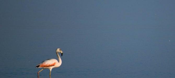 Reserva Nacional de Paracas, el paraíso de las aves