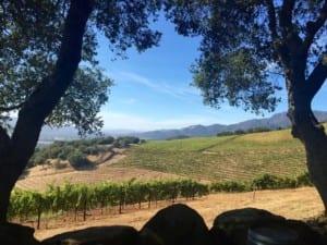 View of a winery in Sonoma County