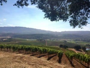 View of Sonoma Valley