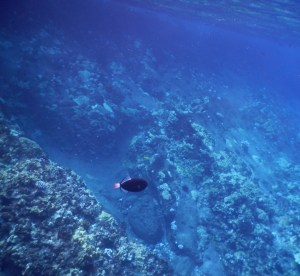 molokini snorkeling tour review