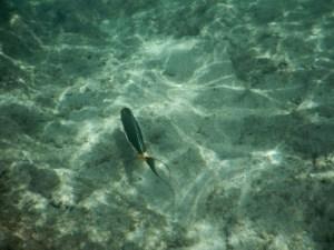 Hanauma Bay Snorkeling Review