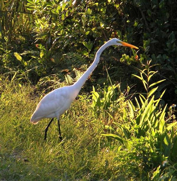 Heron in Everglades National Park