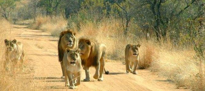 Africa 2012:  Kenya, Tanzania, South Africa – a family adventure itinerary