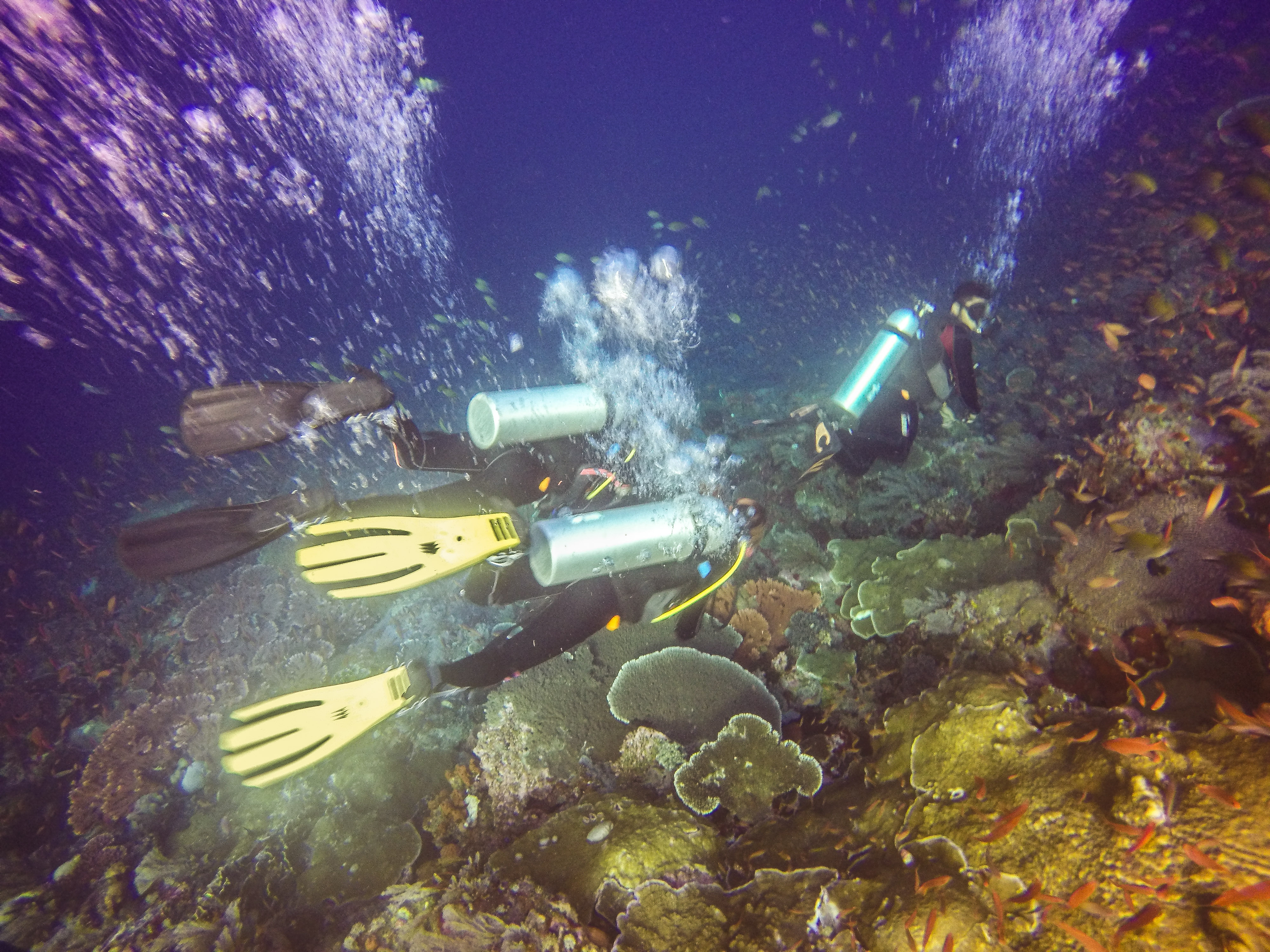 Indonesia Day 11-13 – Komodo Diving: The Wunderpus is not a