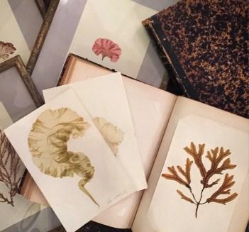 Pile of pressed dried algae on paper