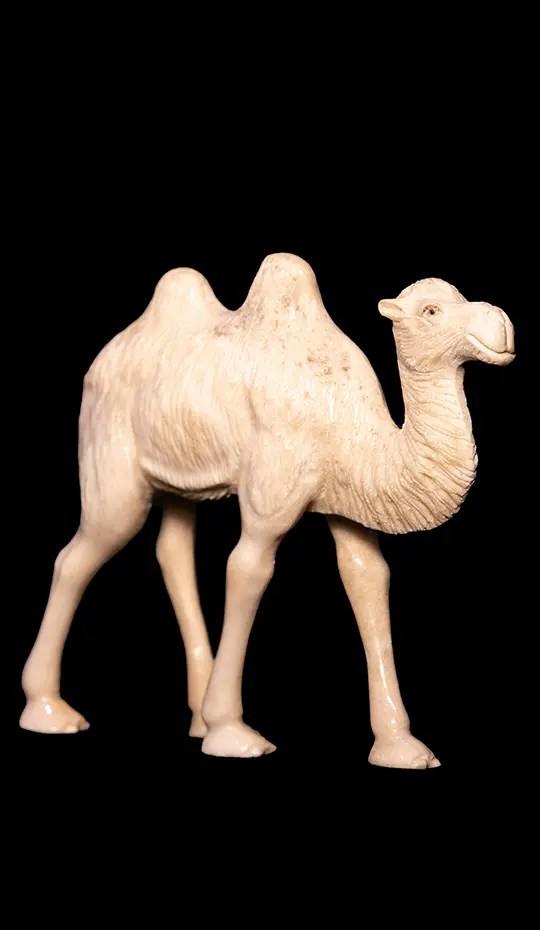 Moose Antler Carving of camel