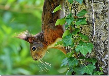 Écureuil et biodiversité
