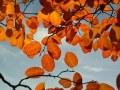 Un jardin en automne
