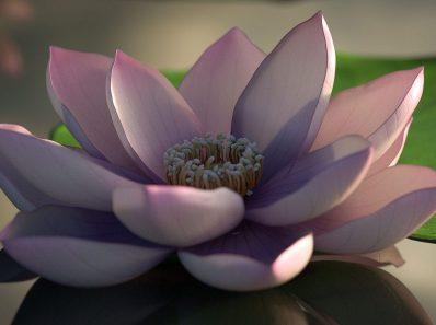 Fiore di loto - perdonare - spiritualità - svincolo dalle passioni