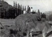 Amadita, Ana María (una veraneante de Gijón), Javi (el de Cesárea) y Pepín.