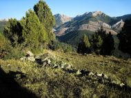 Crémenes, sabinar, Las Arroscas, aprisco 1 sept 2014 6384