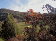 Crémenes, sabinar, roble (quercus robur), Las Fuentes 27 feb 2014 8006