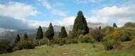 Crémenes, sabinas el Pozo el Sedo 3 mayo 2011 7748