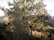 Crémenes, robledal, Sobremonte 1 sept 2014 6393