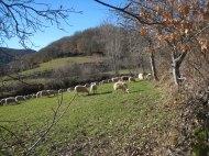 Crémenes robledales, camino de Fuente de Oro 19 feb 2014 7740
