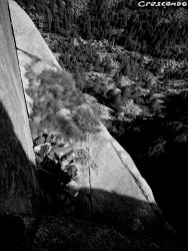 Oreille du Pachyderme Orco