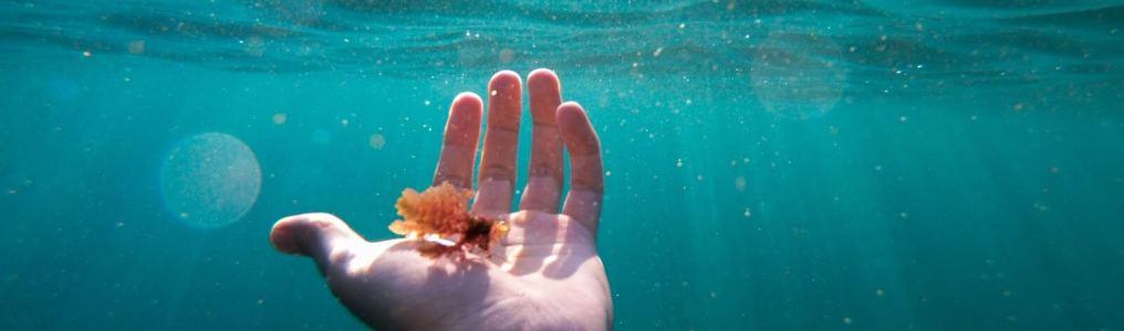 海の中の手