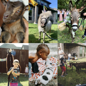 Top Petting Zoos Near Me Updated July 2021 Gigsalad