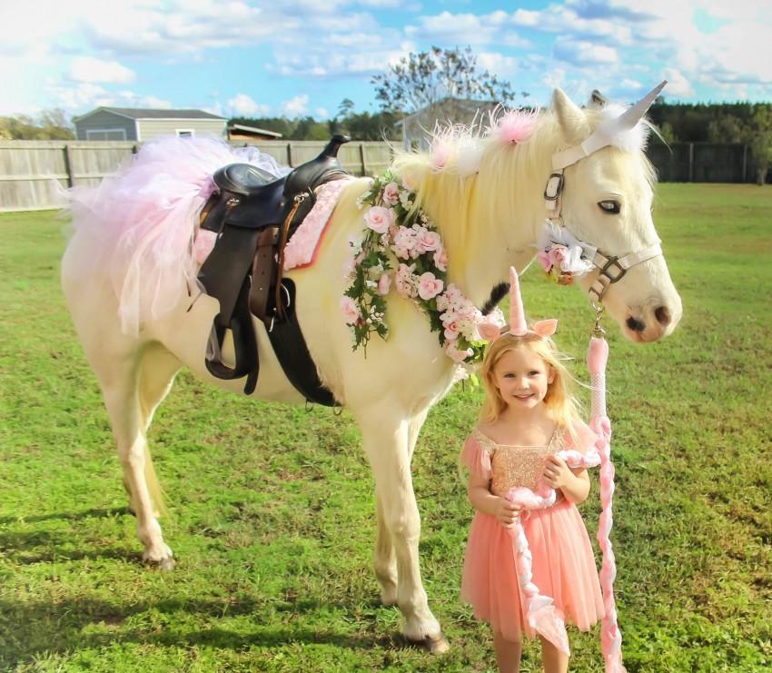 Hire Shaky Tail S Party Animals Pony Party In Fayetteville North Carolina