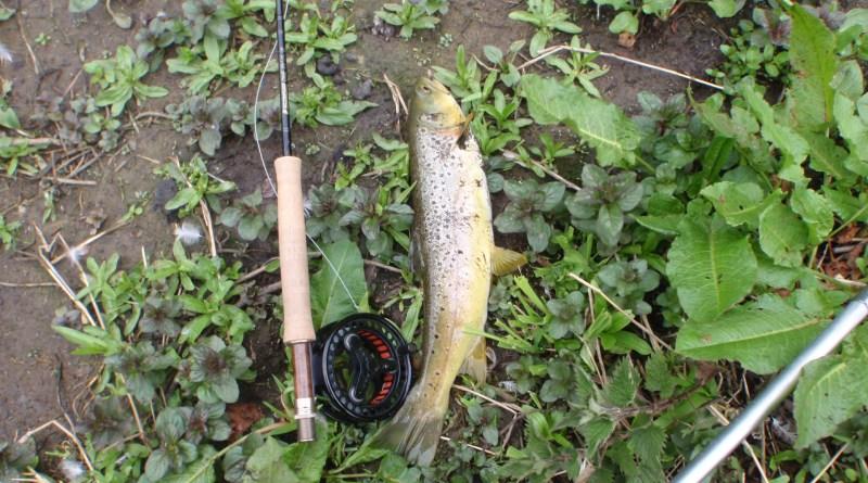 Cressbrook caught fish