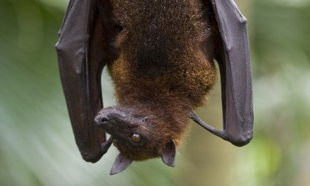 Bat Tests Positive for Rabies in Saguache County