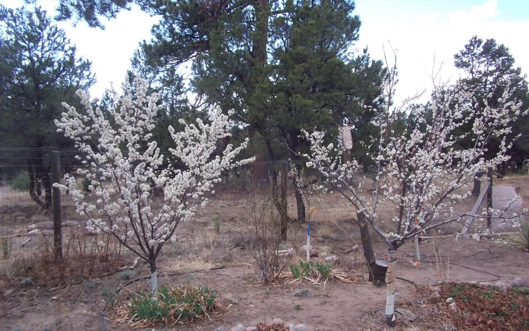 Garden Guru: The miracle of trees