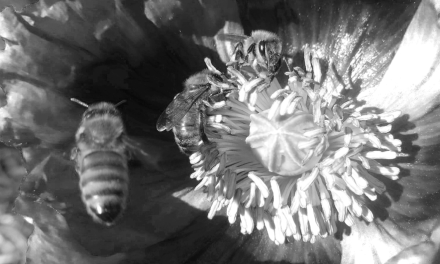 As the Worm Turns: Honeybee forage flowers