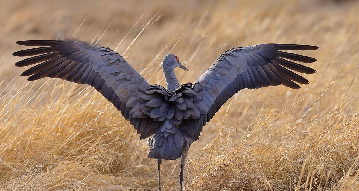 The Crestone Eagle: March 2020