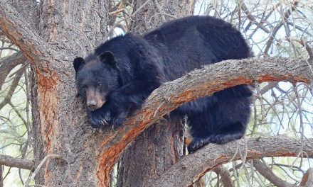 Please report bear sightings and problems as soon as possible